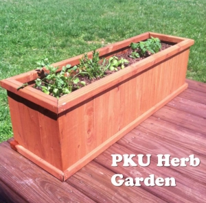 How to Save Money with a PKU Herb Garden